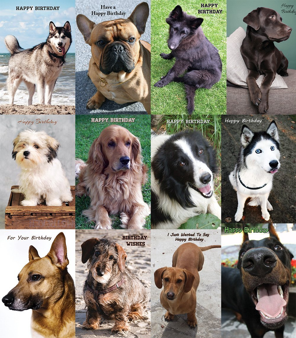 Pet Greeting Cards On Sale In June Harnel Inc
