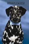 Birthday Dalmatian with Glasses Greeting Card